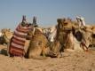 Vakantie Hurghada